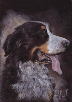 Picturi cu animale ciobanesc