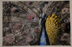 Picturi cu animale Paun A. Gheorghiu