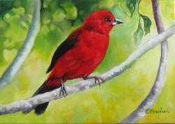 Picturi cu animale Pasare rosie