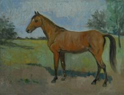 Picturi cu animale cal 22