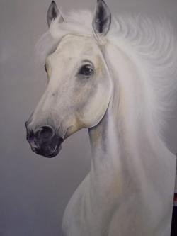 Picturi cu animale cal alb simplu
