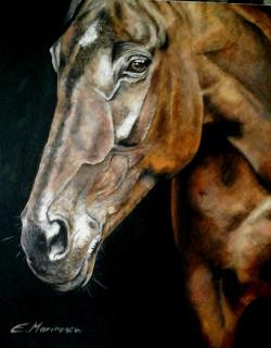 Picturi cu animale Oil painting horse 2