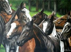 Picturi cu animale pictura herghelie cai