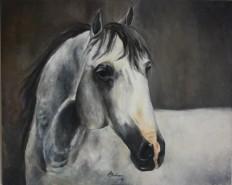 Picturi cu animale Calul gri