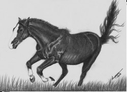 Picturi cu animale Cal liber
