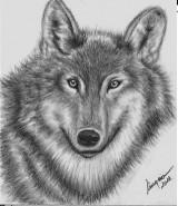 Picturi cu animale Cap de lup