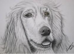 Picturi cu animale Desen in creion