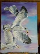 Picturi cu animale Seagulls