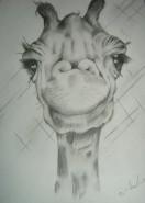 Picturi cu animale Girafa