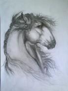 Picturi cu animale Klabruder