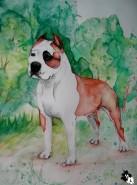 Picturi cu animale Multi ch sindelars oscar