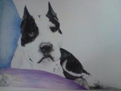 Picturi cu animale Portret amstaff
