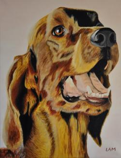 Picturi cu animale Roy