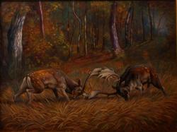 Picturi cu animale lupta cerbilor