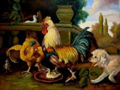 Picturi cu animale Tablou cocosul cu gaina