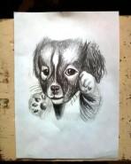 Picturi cu animale Animalul preferat