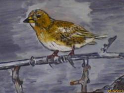 Picturi cu animale pasare asteptand