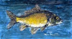 Picturi cu animale Caracuda