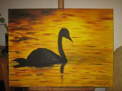 Picturi cu animale Lebada neagra