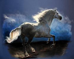 Picturi cu animale Stallion