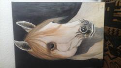 Picturi cu animale portret cal frumi