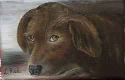 Picturi cu animale Prietenul omului