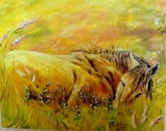 Picturi cu animale Inceput de vara