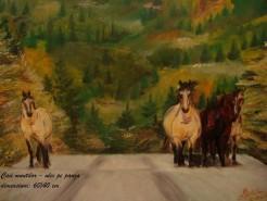 Picturi cu animale Caii muntilor