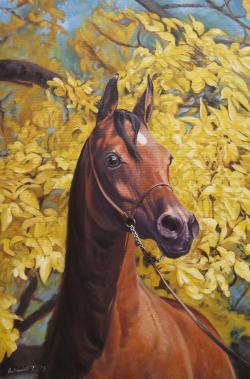 Picturi cu animale Arabian Horse