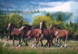 Picturi cu animale Libertate!
