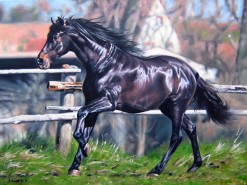 Picturi cu animale Pur-sange