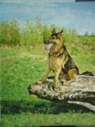 Picturi cu animale Ax