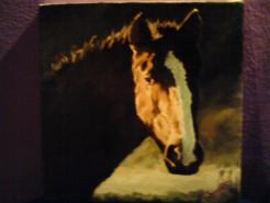 Picturi cu animale Cal negru