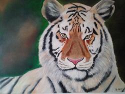 Picturi cu animale Tigrul alb
