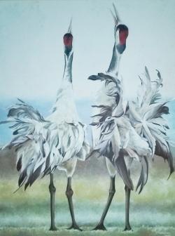 Picturi cu animale cocori