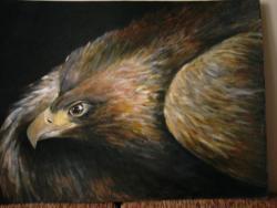 Picturi cu animale Acvila