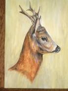 Picturi cu animale Caprior