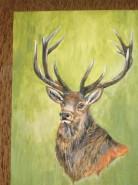 Picturi cu animale Cerb