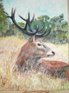 Picturi cu animale Cerb 2