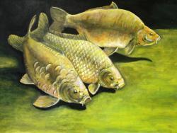 Picturi cu animale crapi