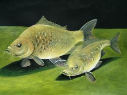 Picturi cu animale crapii