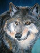 Picturi cu animale Lup