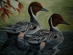Picturi cu animale Pe lac 5