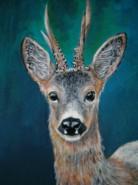 Picturi cu animale Portret de caprior 2
