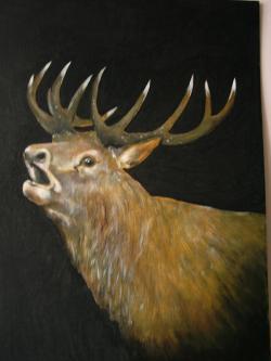 Picturi cu animale Portret de cerb 2