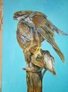 Picturi cu animale Soim 1