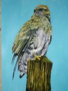 Picturi cu animale Soim 2
