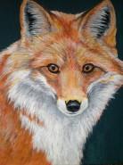 Picturi cu animale Vulpe