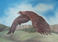 Picturi cu animale Vulturul