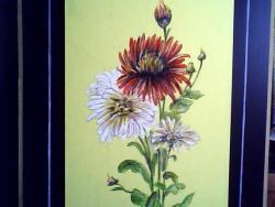 Picturi acuarela crizanteme 54